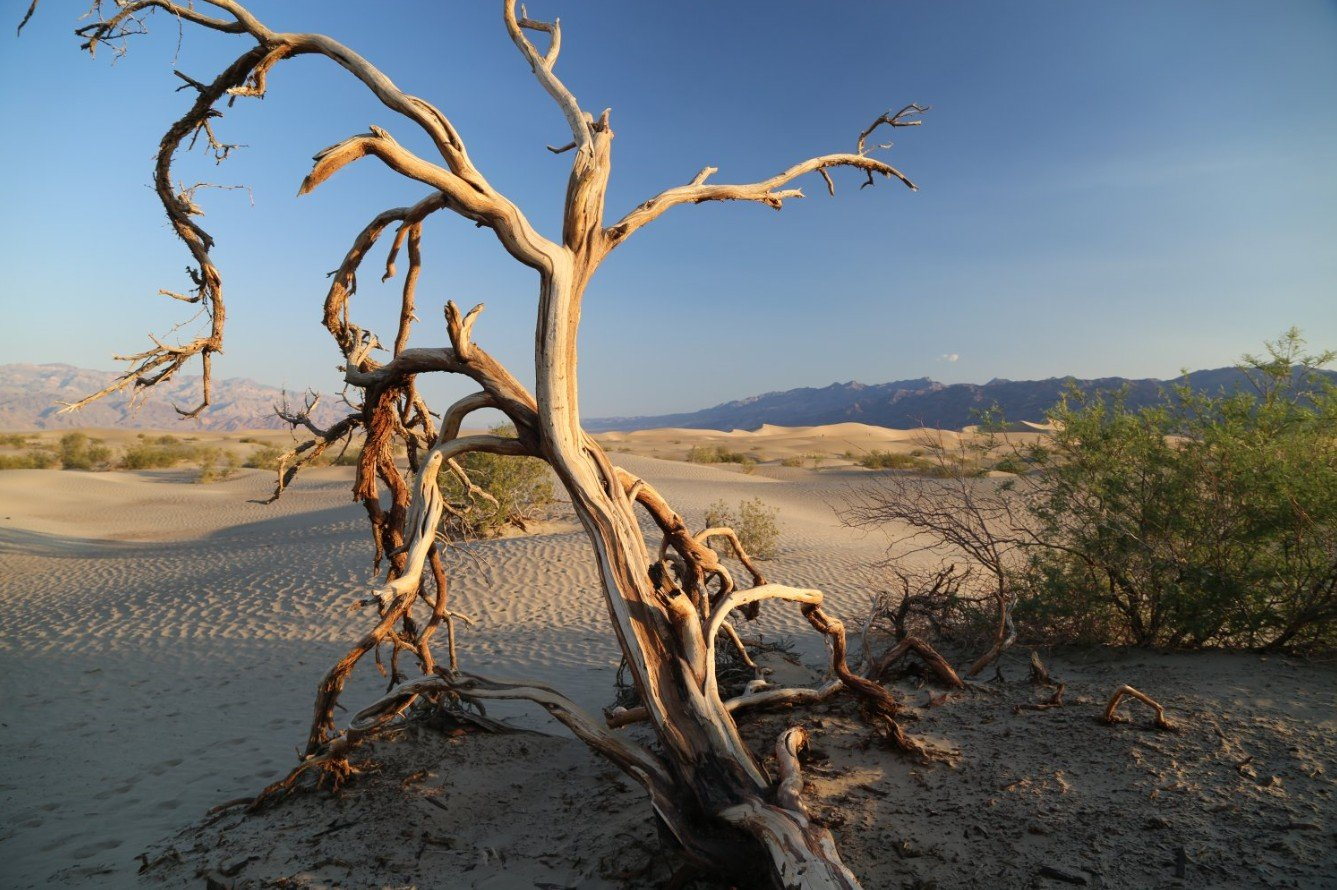 2Questions-026348 (Death Valley Nat.Park)