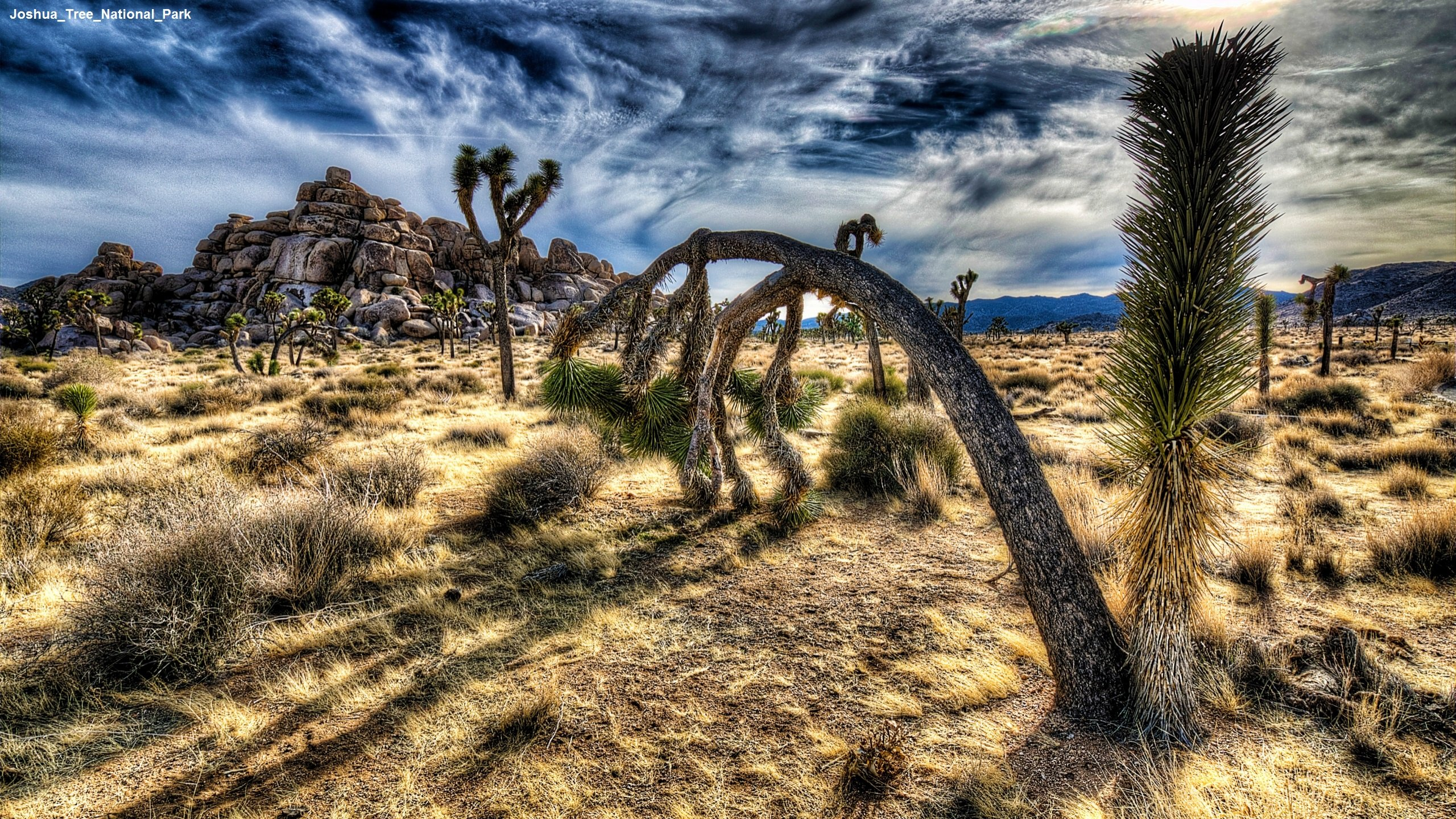 515717-Nature_Joshua_Tree_National_Park