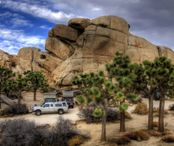 515760-Nature_Joshua_Tree_National_Park
