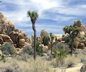 515788-Nature_Joshua_Tree_National_Park