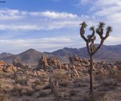 829908-Nature_Joshua_Tree_National_Park