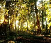 436098-Nature_Lamington_National_Park