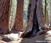 2Questions-016577 (Sequoia Nat. Park, California)