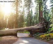 2Questions-016579 (Sequoia Nat. Park, California)