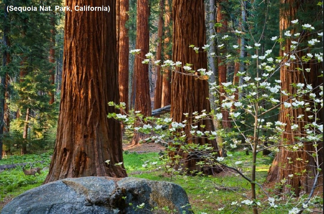 2Questions-016581 (Sequoia Nat. Park, California)