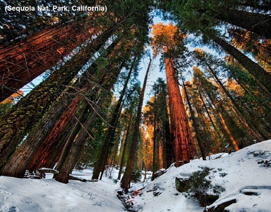 2Questions-016582 (Sequoia Nat. Park, California)