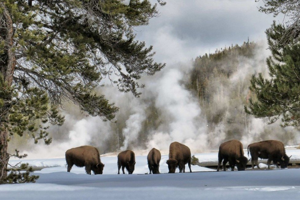 2Questions-016660 (Yellowstone National Park, usa)
