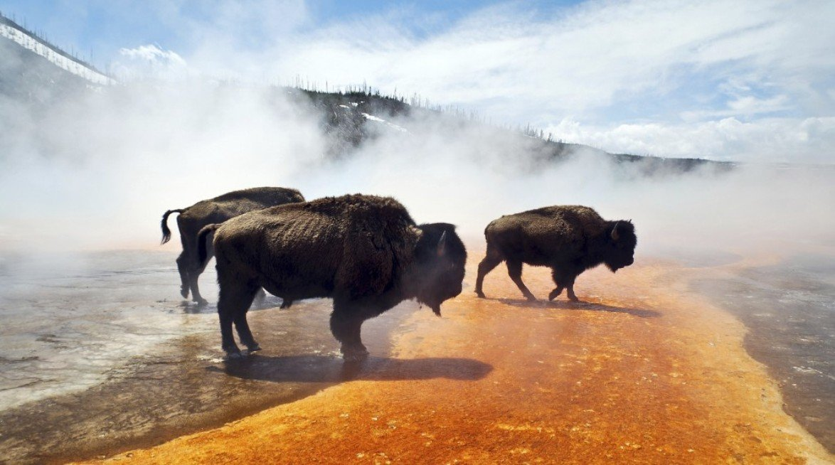 2Questions-016669 (Yellowstone National Park, usa)