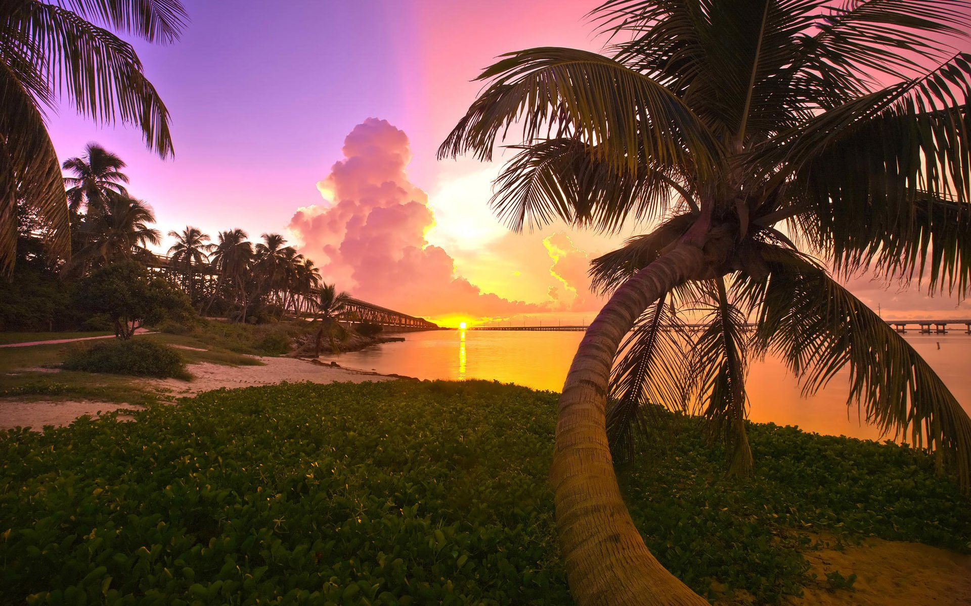 398673-Nature_Beach_palm_tree
