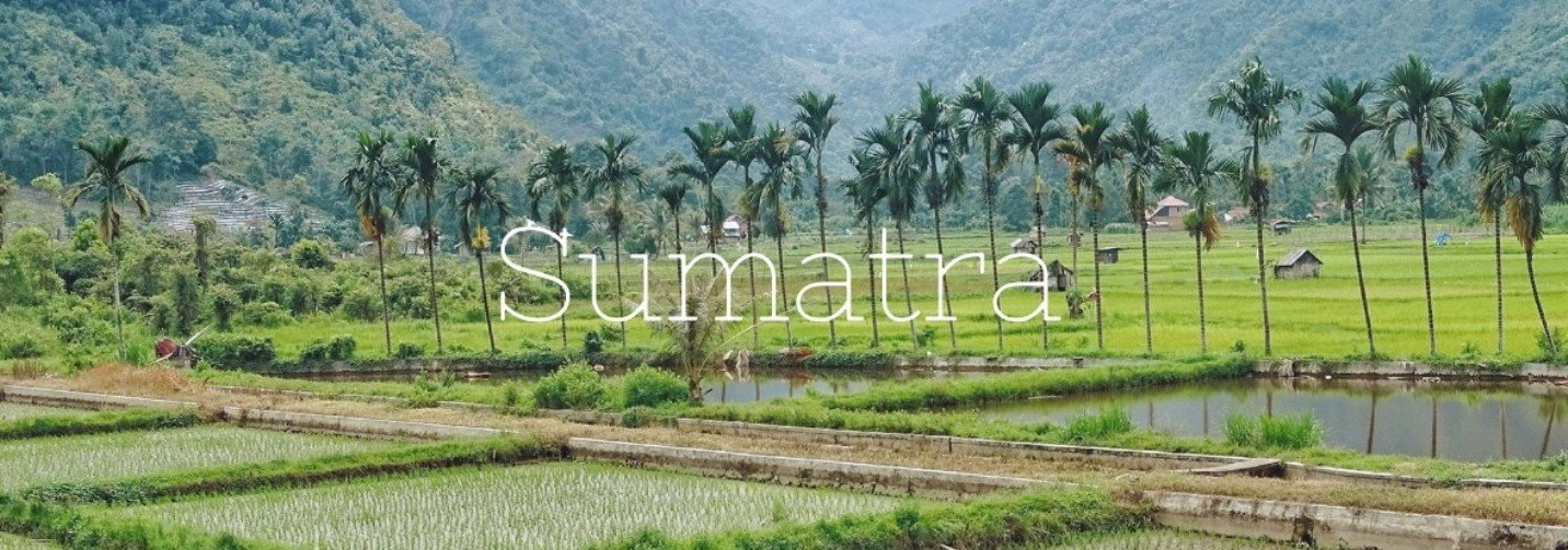 2Questions-017340 (Sumatra - Indonesia)
