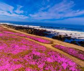 2Questions-037698-USA-California-Monterey