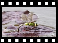 Animals_18_Insects video
