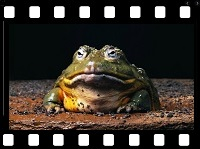 Animals 19 Frogs video